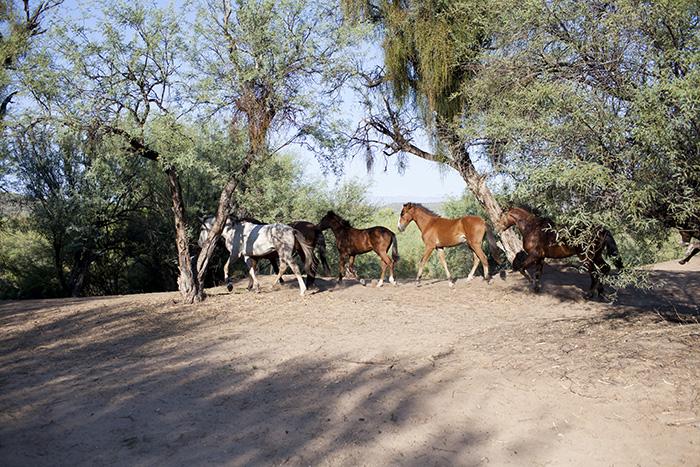 az-desert-maternity-photo